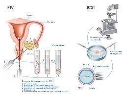 inseminacion2